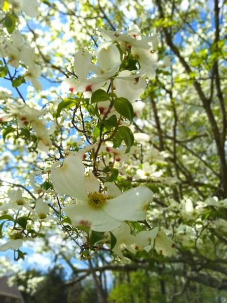 Flowers-007.jpg