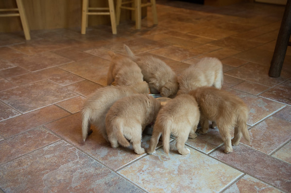 Puppies - Inside