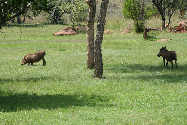 Safari-2008