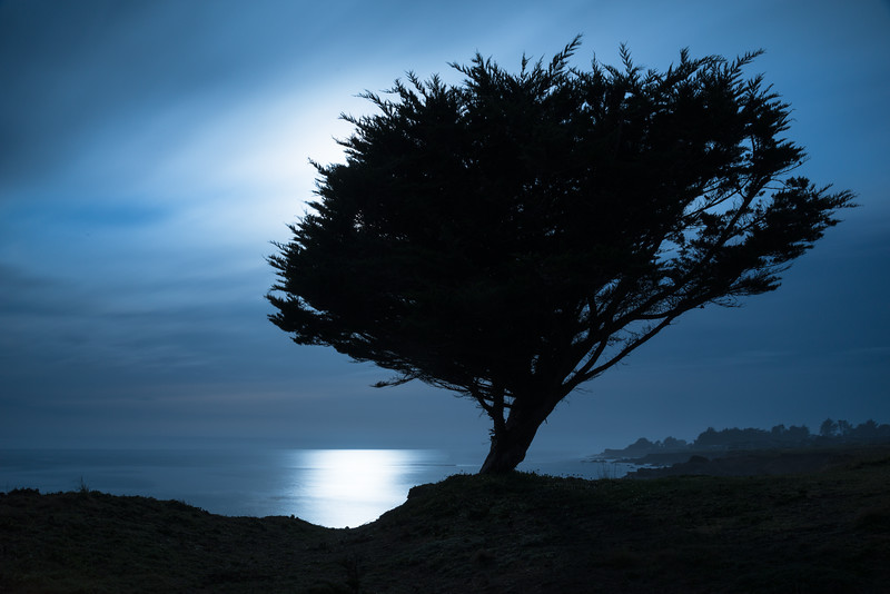 Cypress Silhouette, Sea Ranch, California
