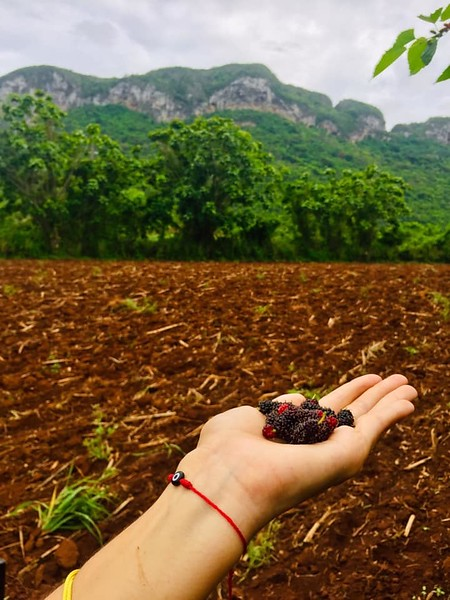 blackberry vinales.jpg