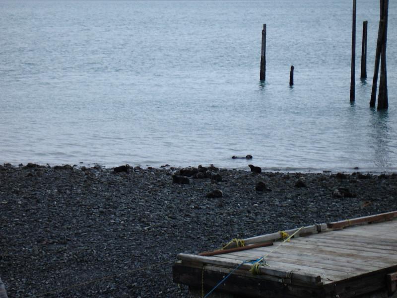 Alaska 2008 055.jpg