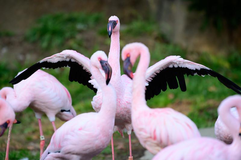 Oakland Zoo-71200-11.jpg