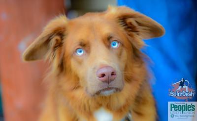 DoggieDash Photos