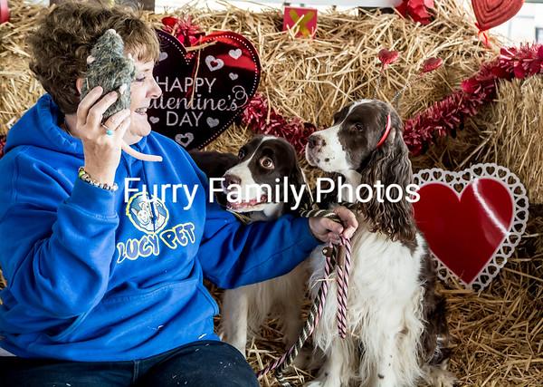 Superstition Performance Barn Hunt Feb 2017