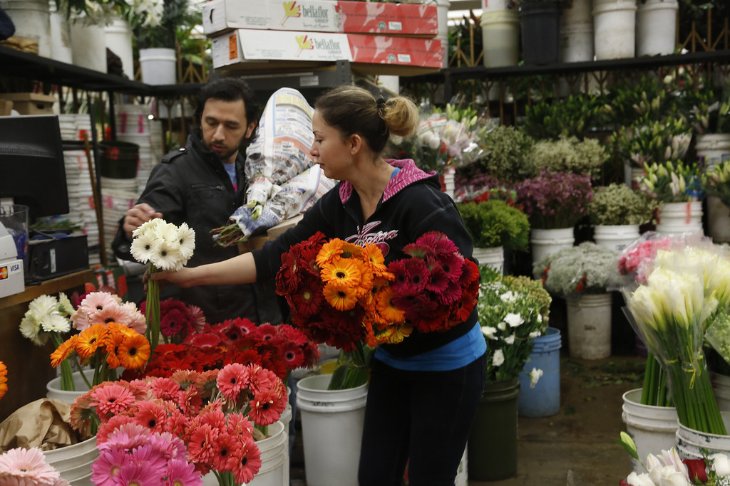 . Buyer Steve Moreno examines flowers for purchase for his girlfriend for Valentine\'s Day, from a woman who identified herself only as Susie, Friday Feb. 14, 2014 at the Flower Market in Los Angeles. (AP Photo/Nick Ut)