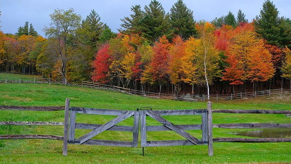 Vermont Foliage 2018