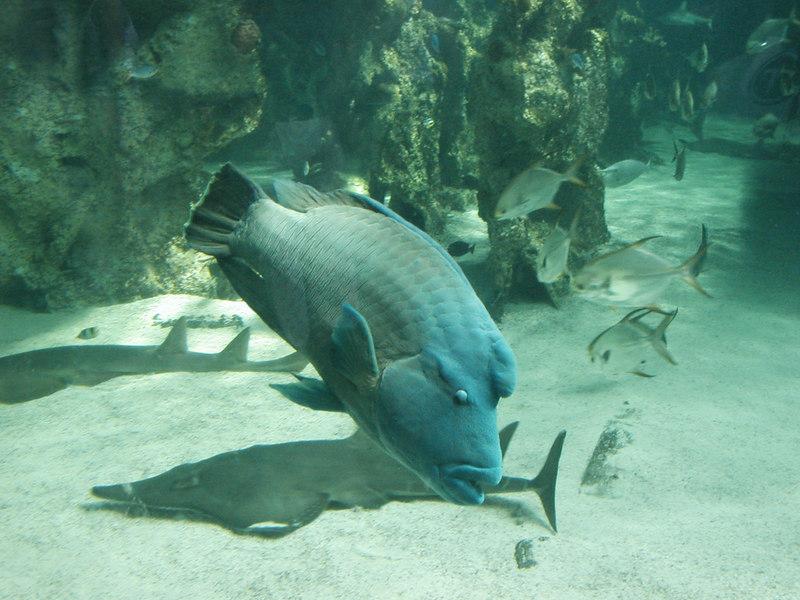 52.  Sydney Aquarium.JPG