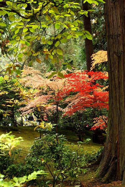 Portland Japanese Garden  11-11-11  3526.jpg