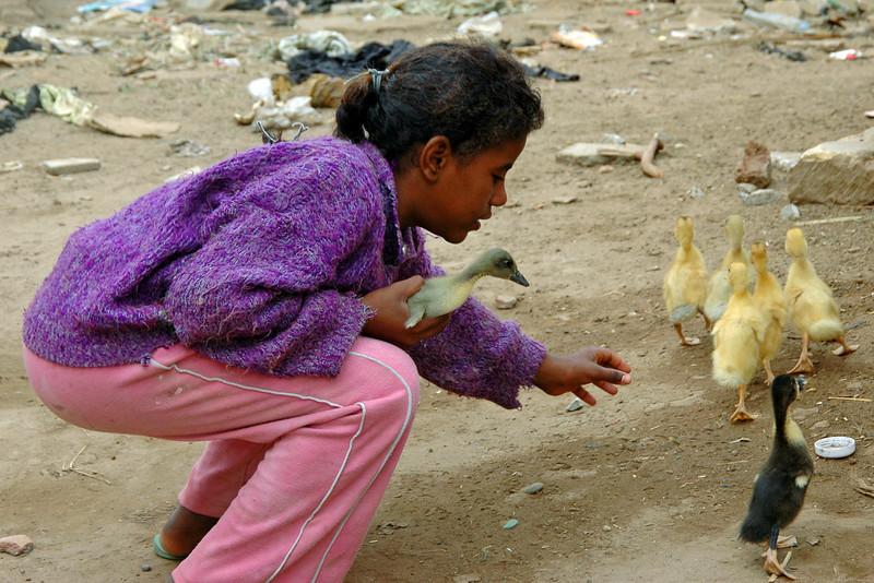a bird in hand ...