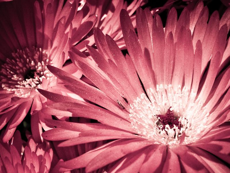 mar15_petal.jpg