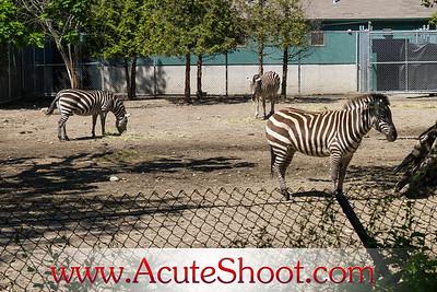 Roger Williams Zoo 2012
