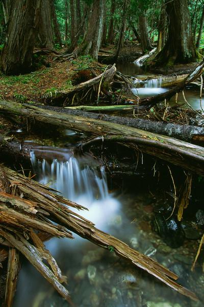 Ruisseau - Parc national de la Gaspésie, Québec