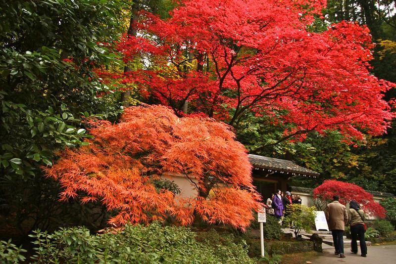 Portland Japanese Garden  11-11-11  3585.jpg