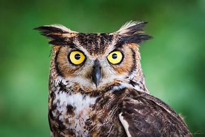 Hawks Over Hudson - Oct 2018