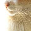 Pet Portraits :