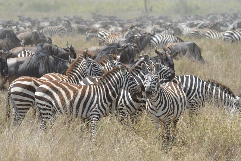 East Africa Safari 326.jpg