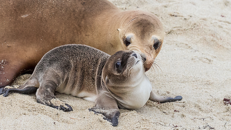 sea lion and pup 2.jpg