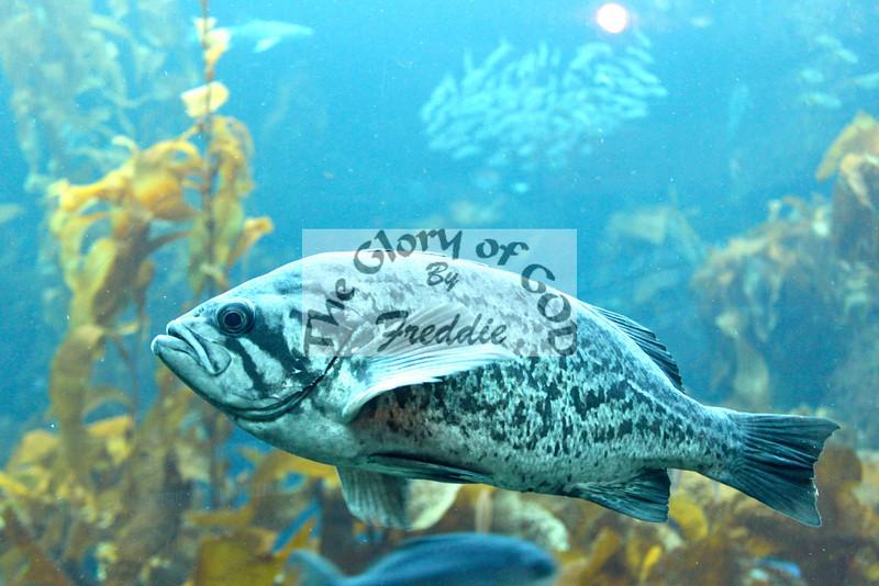 Aquarium 20139.jpg