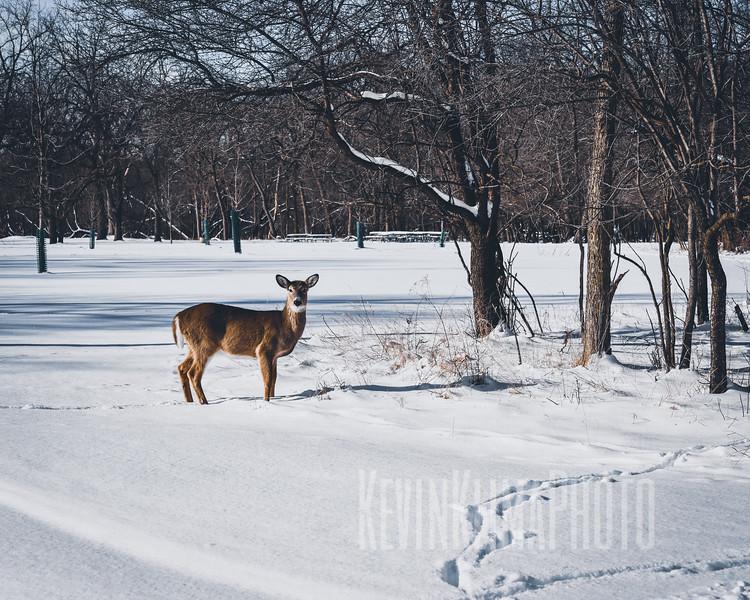 DeerIrvingParkjan2019-4.jpg