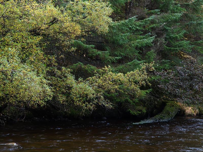 Fish Creek fall color.jpg