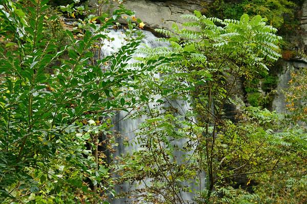 Pisgah Forest 9-30-12