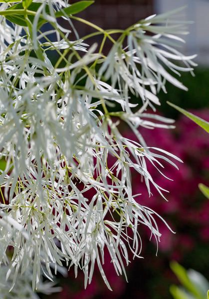 180512_06_6321_Flowers-1.jpg