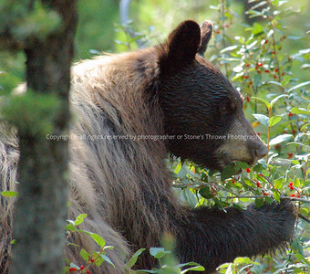 021-bear-grand_tetons-10aug05-0103