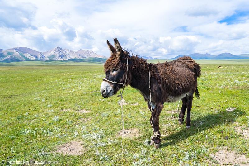 Song Kol Horse Trek-5412.jpg