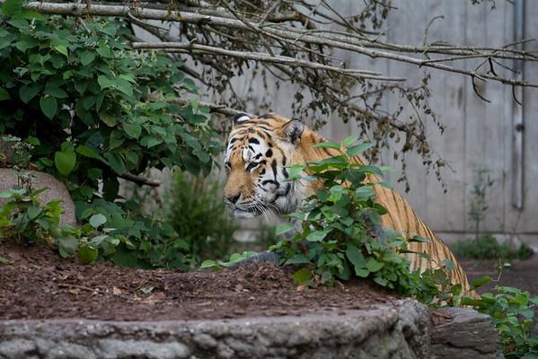 Copenhagen Zoo, Sep 2008