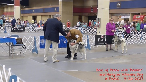 Misc Dog Show Video