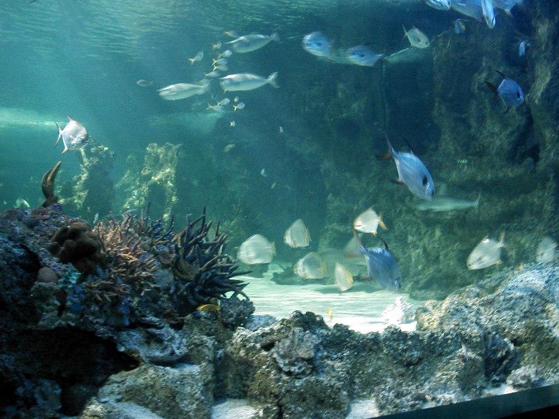 61.  Sydney Aquarium.JPG