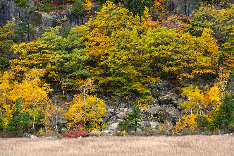 DSC00101 Autum Golds,Acadia National Park,Me..jpg