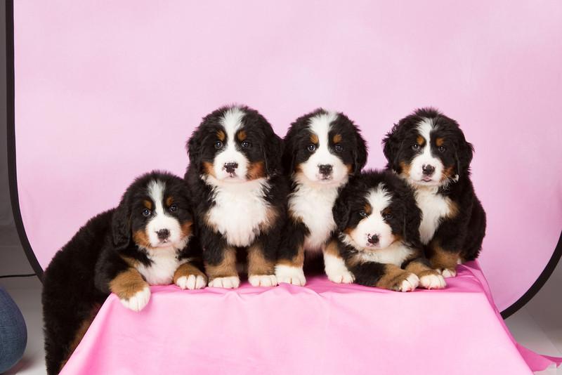 2013-Pearson Pups-Jun02-0299.jpg