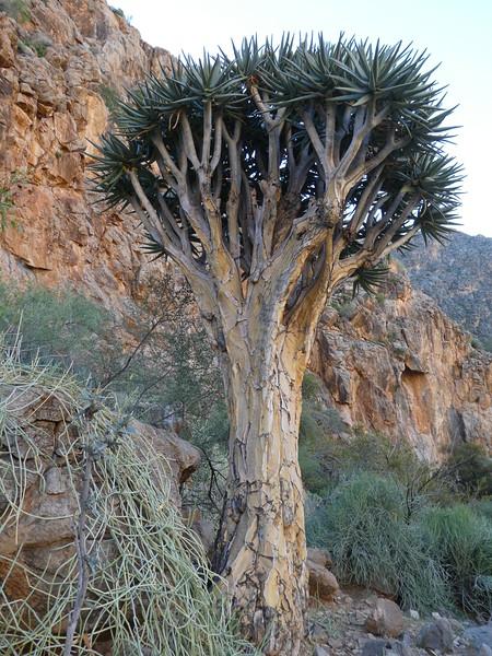 Namibia Lumix  (122).JPG