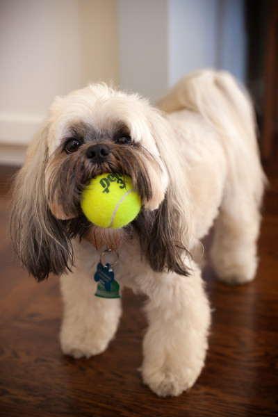 That ball barely fits in his mouth