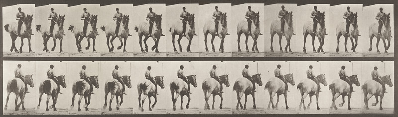 Horse Dusel trotting with bareback rider (Animal Locomotion, 1887, plate 600)