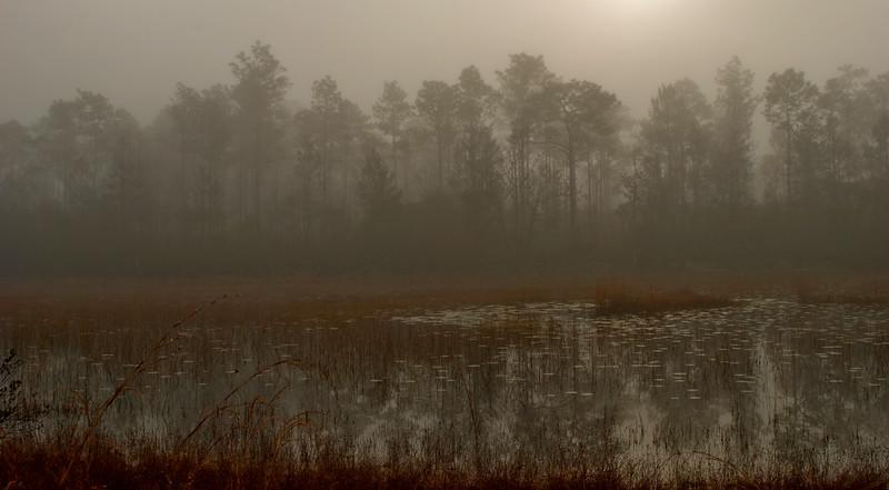 OCALA Salt Springs foggy pond.jpg