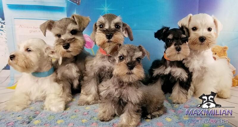 Wunderbar Pups 010.jpg
