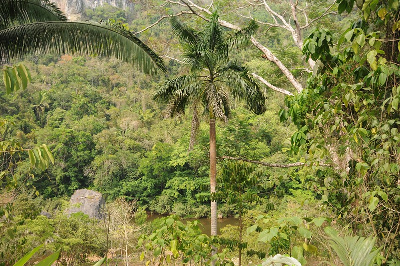 view from lodge.jpg