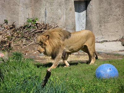 SF Zoo 2008 - Ramis & Lindsey