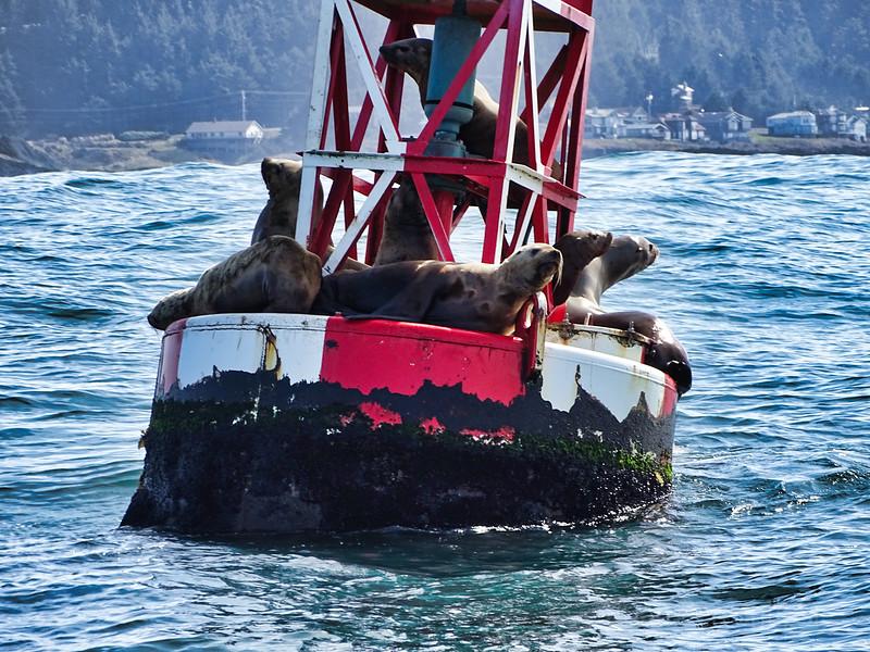 Sea Lion Buoy Oregon Coast