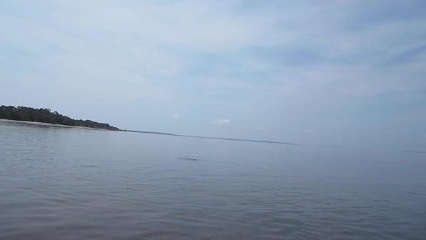 Jekyll Island Boat Tours Dolphin Daze Dolphin Videos 07-15-16-20