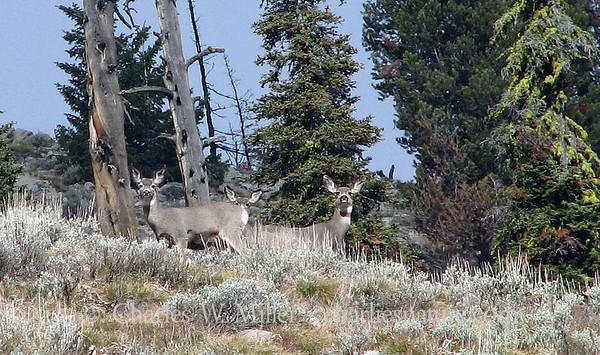 The Sawtooth Mountains of Idaho