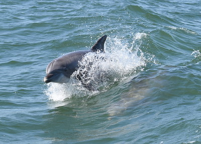 Dolphins, Whales and more...
