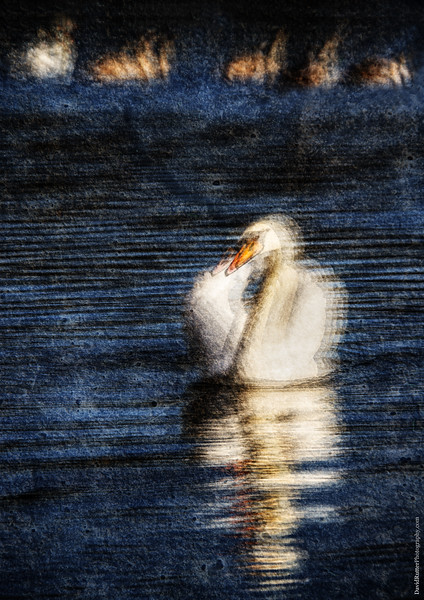 Swan Lake Winter Season 2018/2019