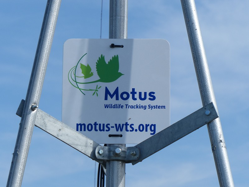 MOTUS Wildlife Tracking System