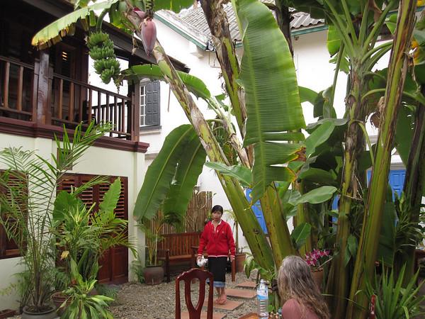 2010-01-05-Laos 2