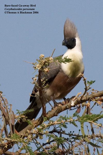2006 Uganda