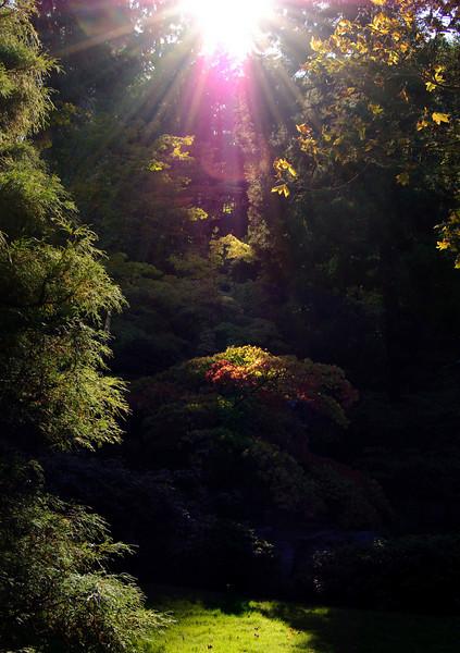 Japnese Garden at Washington Park Arboretum